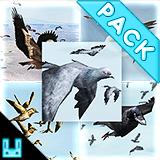 Bird Flock Bundle