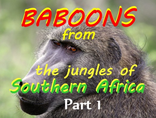 Baboons Part 1