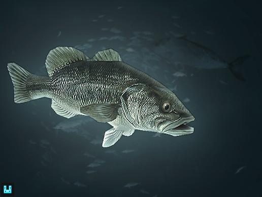 Fish School: Bass