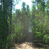 Nature Package - Forest Environment
