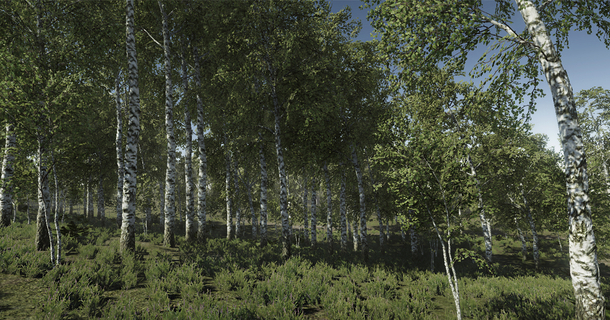 Birch Trees Package