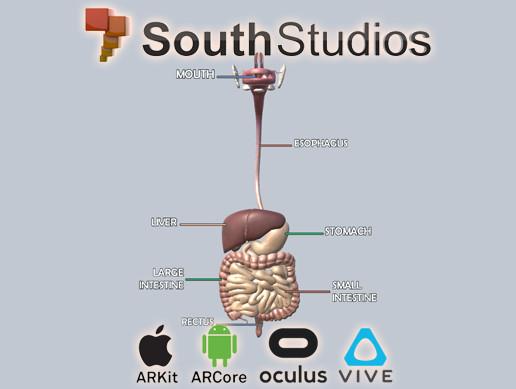 Animated Digestive System AR VR