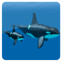 Underwater Animals Pack