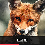 Loading Screen - Simples!