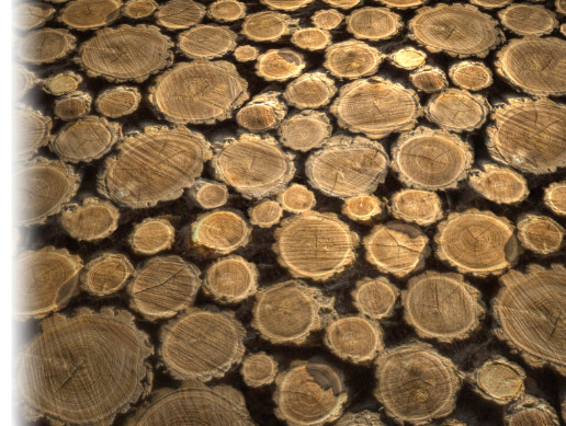 Tileable Log Texture