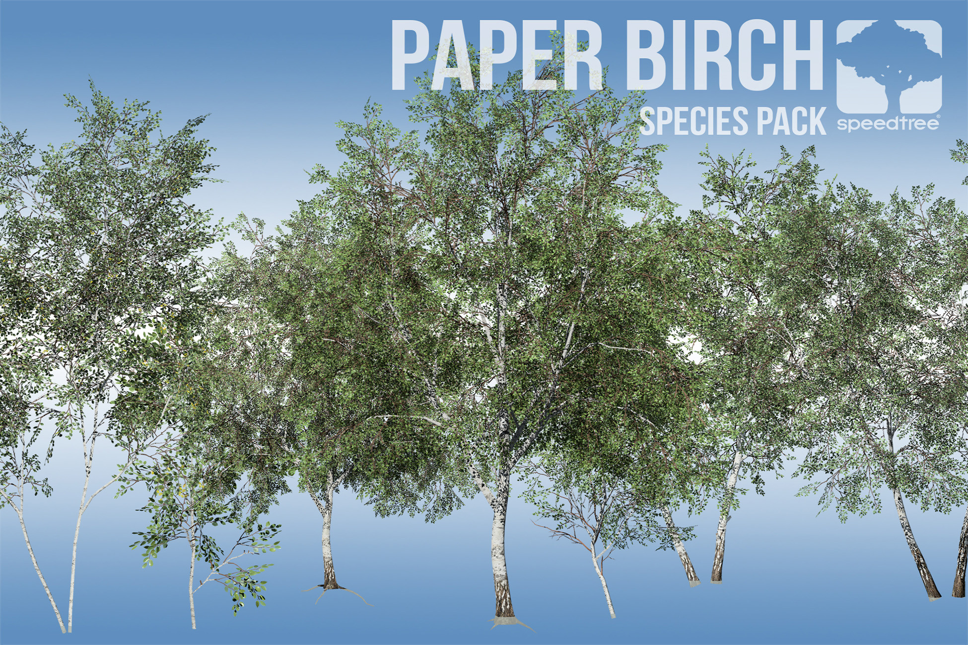 Paper Birch Species Pack (v8)