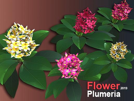 Flower Plumeria