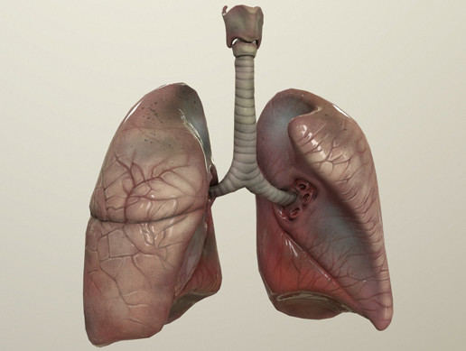 Human Lungs with Animation