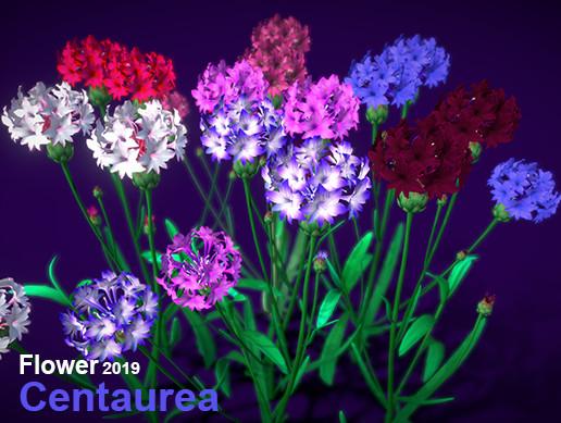 Flower Centaurea