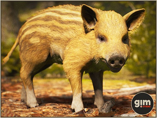 Animalia - Wild Boar Y