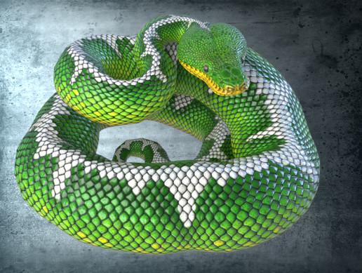 Animated Emerald Tree Boa PBR