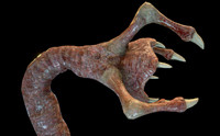 Meat Clawed Worm