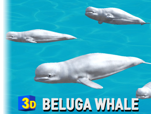 3D Sea Animal Beluga