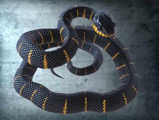 Animated Mangrove Snake PBR