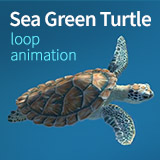 Sea Green Turtle