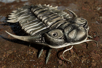Trilobite 04 - KAYSEROPS