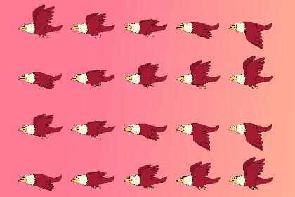 2D Birds(Eagle)