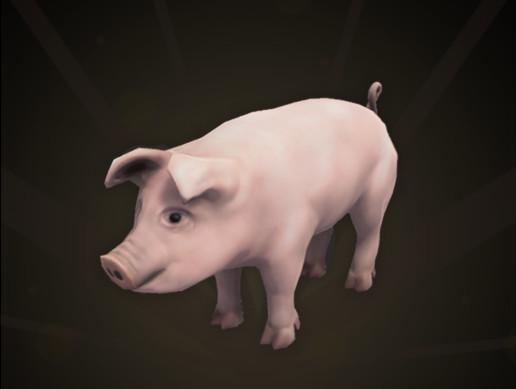 Pig | Farm Animal