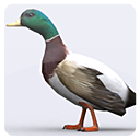 3DRT-Animals Birds Duck