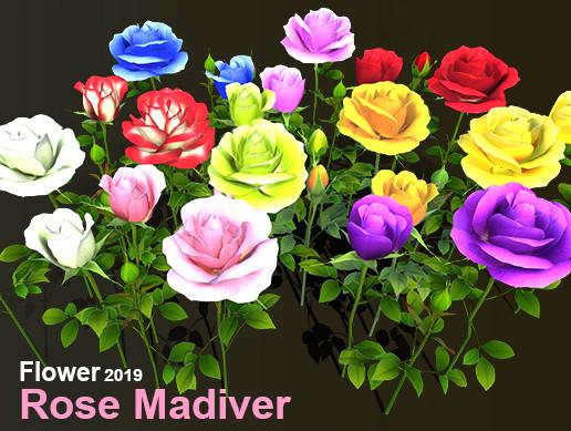 Flower Rose Madiver
