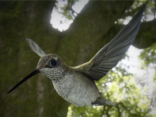 Hummingbird Animated
