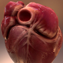 Human Heart Animated