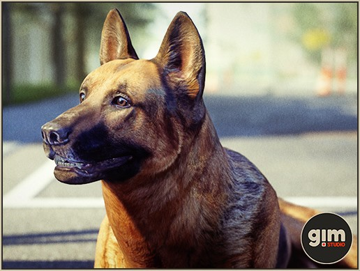 Animalia - German Shepherd M