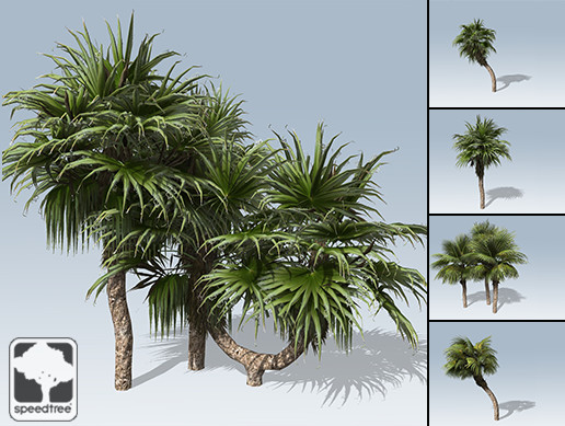 Chinese Fan Palm Package