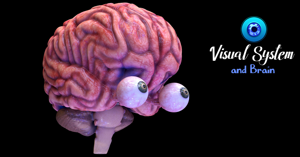 Visual System and Brain Animation