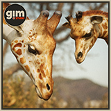 Animalia - Giraffe (pack)