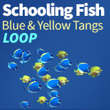 Schooling fish Blue and Yellow Tangs