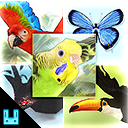 Bird Flock Bundle 2