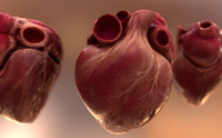 Human Heart Animated