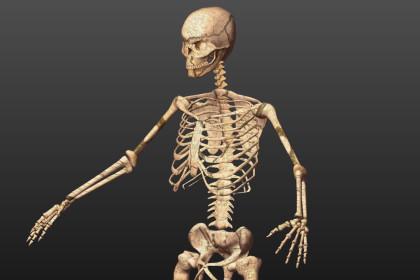 Skeleton-Low Poly