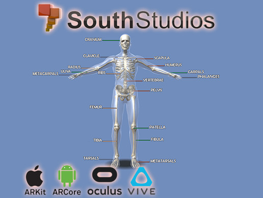 Animated Skeletal System RIG AR VR