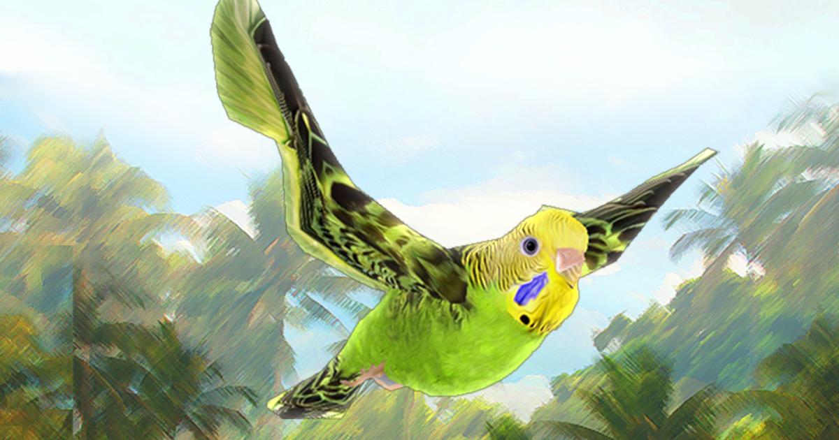 Bird Flock Parakeet