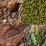 Outdoor Ground Textures