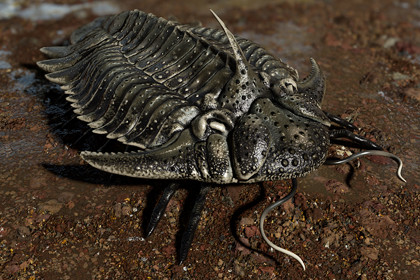 Trilobite 05 - Hoplolichas Furcifer