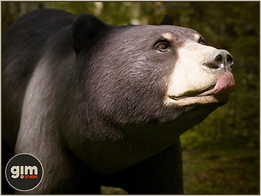Animalia - Black Bear F