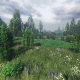 Nature Package - Swamp,Forest Environment