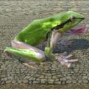 カエルとその骨
