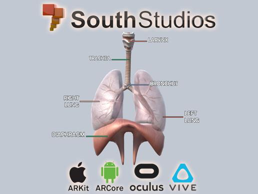 Animated Respiratory System AR VR