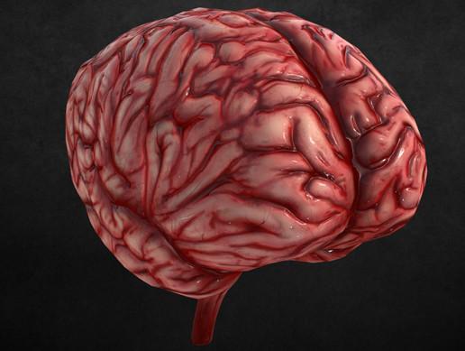 HQ Human Brain