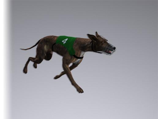Greyhound Dog Real-Time