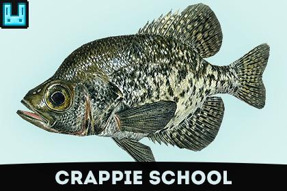 Fish School Crappie