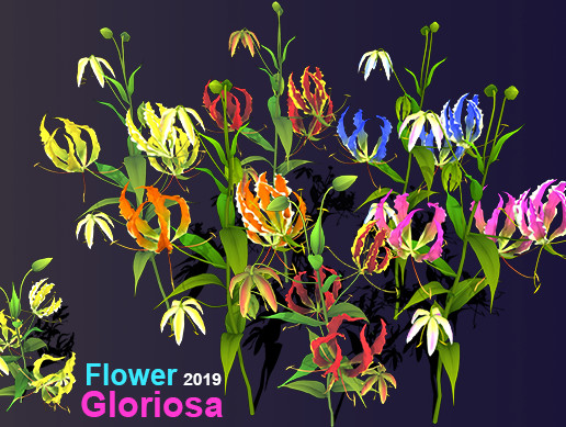 Flower Gloriosa