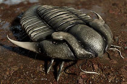 Trilobite 02 - ILLAENUS TAURICORNIS