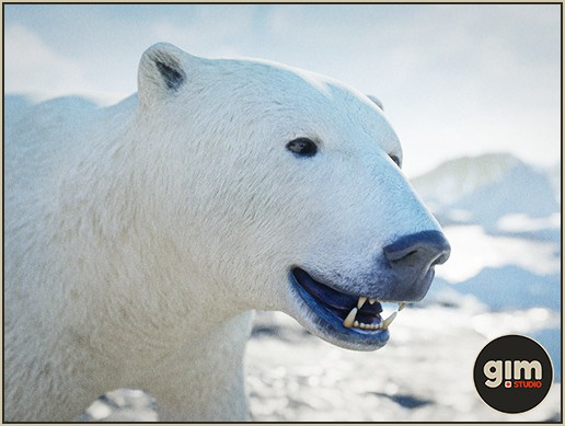 Animalia - Polar Bear F