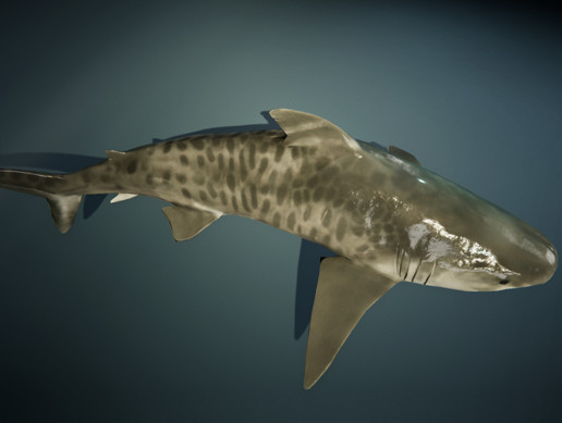 Tiger Shark Animated