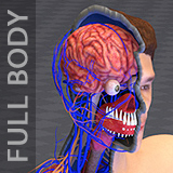 Male Human Body Anatomy Systems